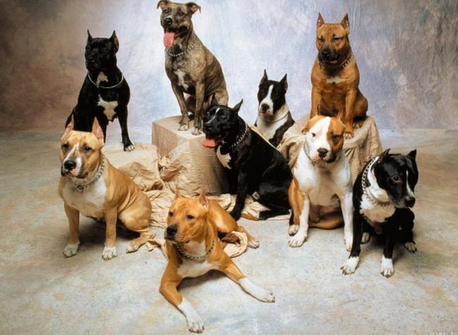 Верховная Рада собирается запретить содержать дома не породистых собак