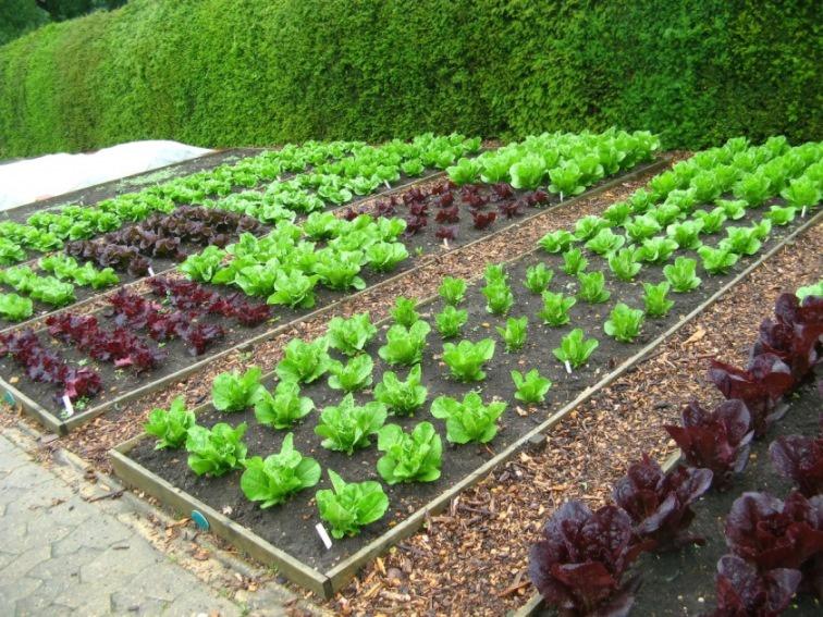Капельный полив для огорода