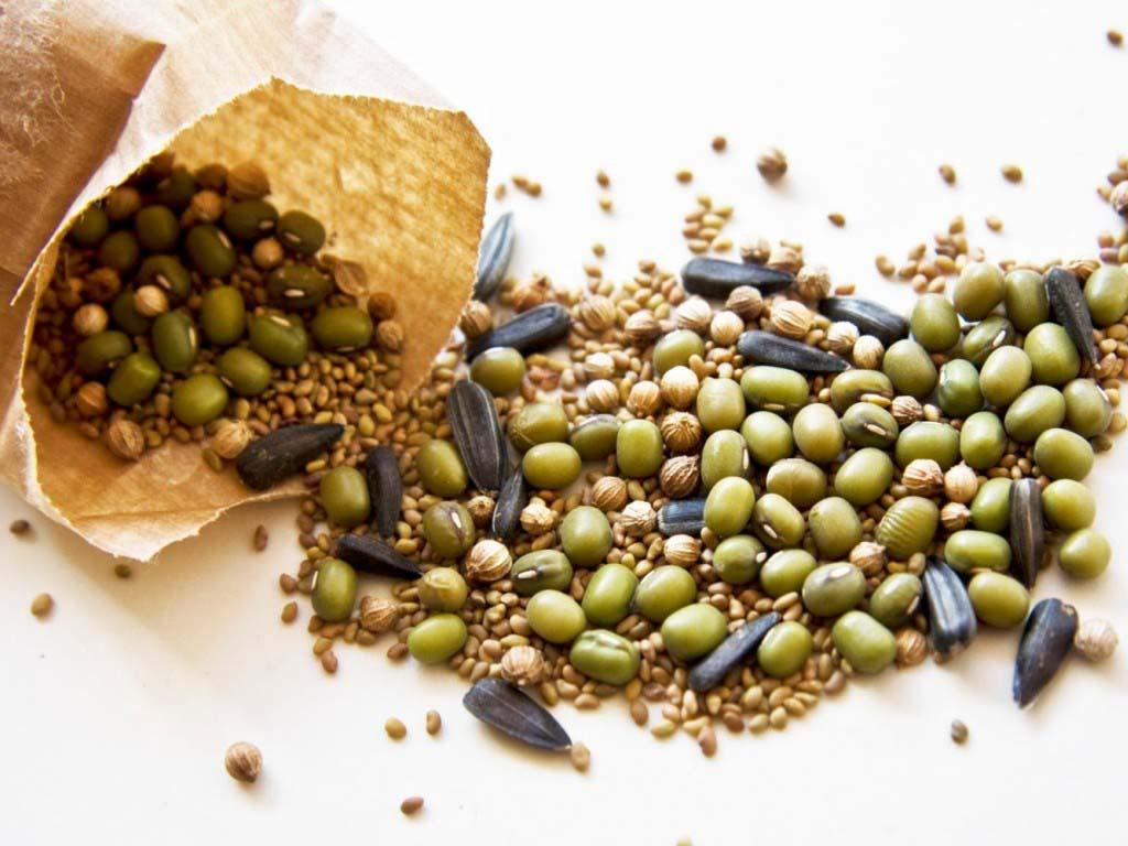 Каталог семян для сельскохозяйственных предприятий и частных лиц