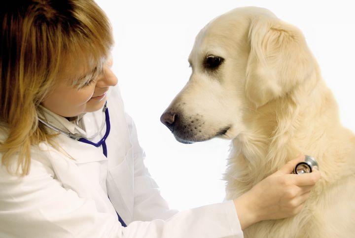 Ветеринарная клиника для вашего любимца