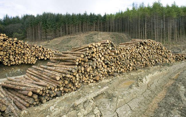 Стало известно, почему Порошенко наложил вето на закон о контрабанде леса