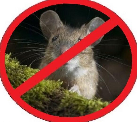Родентициды для ликвидации крыс и мышей