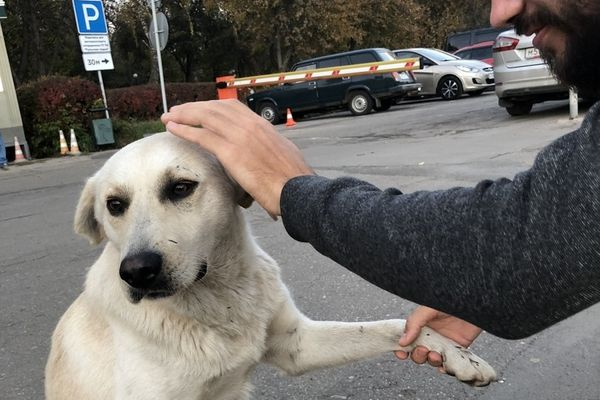 Максим Беляев предложил футболку и деньги тому, кто найдёт убежавшую бездомную собаку