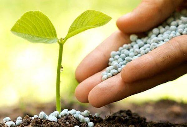 Качественные удобрения для растений