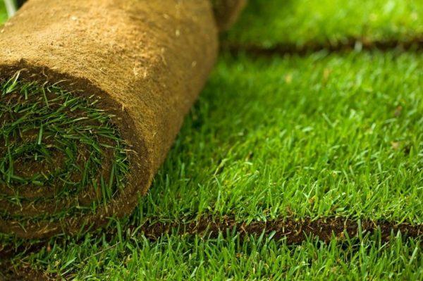 Озеленение территории с помощью рулонного газона