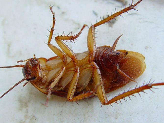 Фипронил: сфера применения и особенности инсектицида