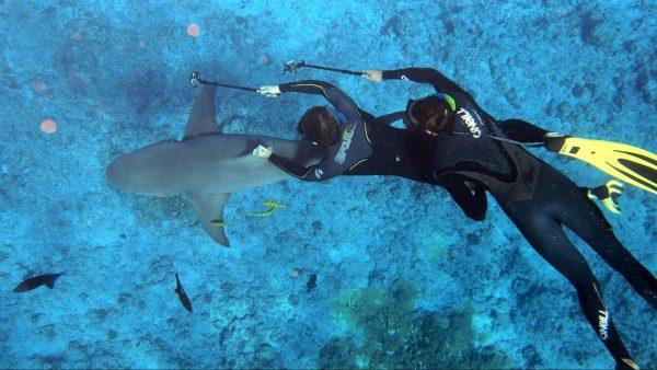 Выбор гидрокостюма для дайвинга и подводной охоты