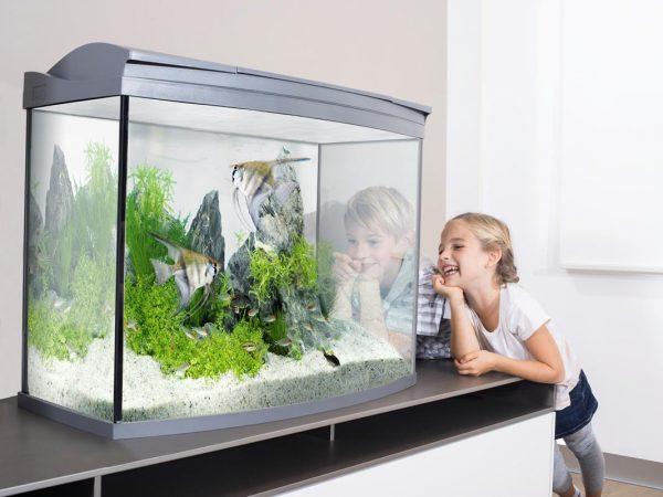 Как выбрать аквариум для рыбок