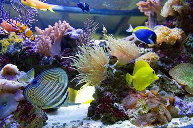 Большой каталог товаров для морских аквариумов
